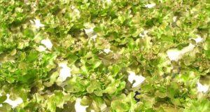 В Узбекистане открылся современный цех по производству субстрата на основе базальтовой ваты