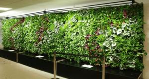 Аэропорт Хитроу озеленился вертикальным садом на минеральной вате