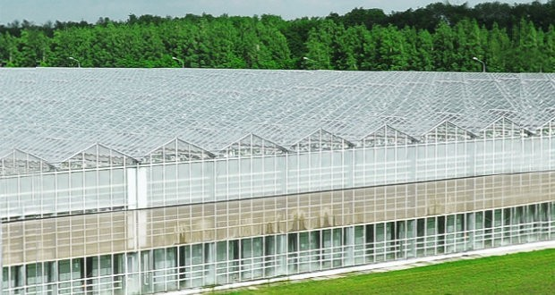 Lipetsk greenhouses on basalt substrate announced plans for expansion
