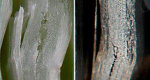 Исследование механических характеристик эпоксидной трубы из базальтового и стекловолокна